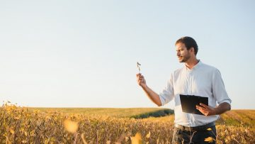 Agronomist inspects soybean crop in agricultural field – Agro concept – farmer in soybean plantation on farm.