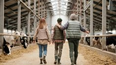 Father sharing farm experience with son
