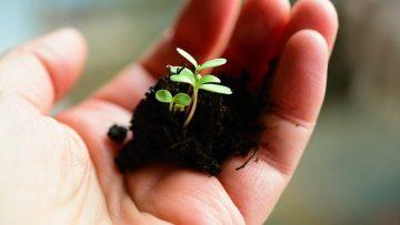 plant-4036130_640