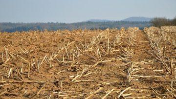 stubble-glean-field-cornfield-harvested-agriculture-harvest-rural