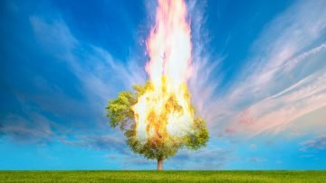 Burning Tree on fire at day with stormy sky
