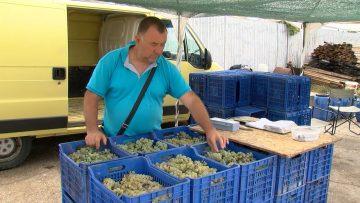 zabrana prodavane na grozde agrotema blagoevgrad.mp4_snapshot_07.45.192