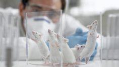мишки лаборатория