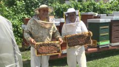 симеон тодоров пчелар теодора