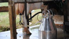 milking-1775201_960_720