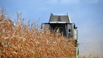 жътва царевица ноември