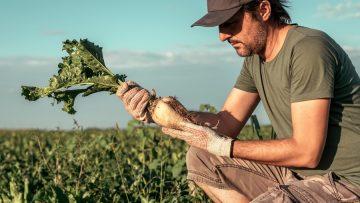 Male farmer posing in sugar beet field