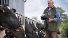 крави фермер таблет