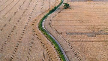Ripe Golden Wheat Fields Aerial