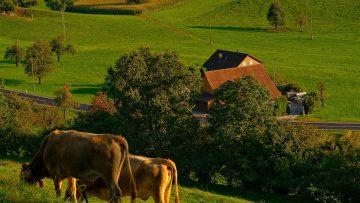 littlefarm